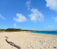 Drijfhout in Lazzaretto-strand stock afbeelding