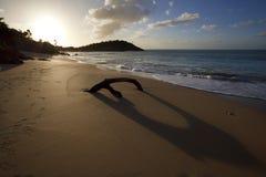 Drijfhout op Caraïbisch Strand bij Zonsondergang, Antigua stock foto's