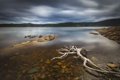 Drijfhout op de kusten van Foldsjoen, Noors bergbos royalty-vrije stock foto