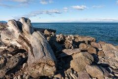 Drijfhout op de vreedzame kust in het Olympische park van de staat, Washington Royalty-vrije Stock Foto