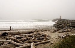Drijfhout op een kust Stock Afbeelding