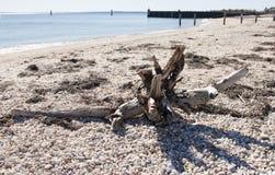 Drijfhout op een rotsachtig strand Stock Foto's