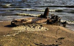 Drijfhout op een strand Stock Foto