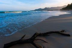 Drijfhout op een strand van Ko Samui royalty-vrije stock afbeelding