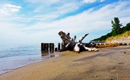 Drijfhout op Groen en Sandy Shore, het Meer van Michigan, de V.S. stock afbeelding
