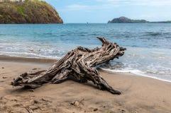 Drijfhout op het strand Royalty-vrije Stock Foto's