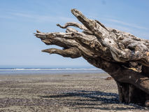 Drijfhout op oceaanstrand Stock Foto's