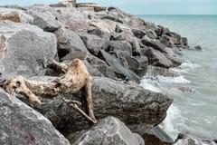 Drijfhout op rotsenmeer Michigan, Wisconsin stock foto's