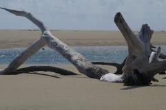Drijfhout op strand Royalty-vrije Stock Afbeeldingen