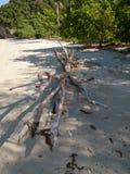 Drijfhout op strand Stock Afbeelding