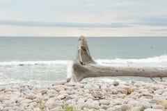 Drijfhout in Zwarte Brooke Cove - Kaap Breton - Nova Scotia royalty-vrije stock afbeeldingen