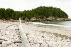 Drijfhout in Zwarte Brooke Cove - Kaap Breton - Nova Scotia royalty-vrije stock foto