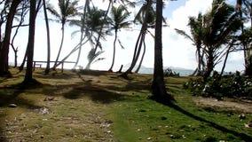 Drijven off-road door een kokosnotenbosje in de Caraïben stock footage