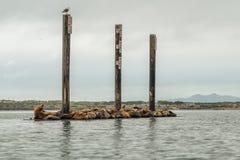 Drijvend Dok met Verbindingen bij Morro-Baai royalty-vrije stock afbeelding