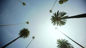 Drijvend door Palmen op Beverly Drive, blauwe hemel, en wijd geschotene zon Beverly Hills stock footage