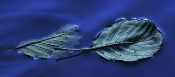 Drijvende bladeren Stock Foto