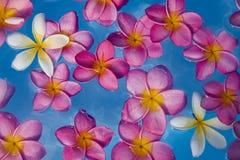 Drijvende Bloemen Stock Foto's