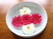 Drijvende bloemen royalty-vrije stock foto