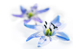 Drijvende bloemen Stock Afbeelding