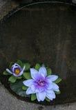 Drijvende bloemen royalty-vrije stock afbeelding
