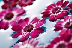 Drijvende bloemen Royalty-vrije Stock Foto's