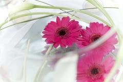 Drijvende bloemen Royalty-vrije Stock Fotografie