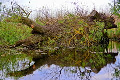 Drijvende boom stock foto's
