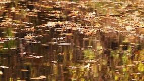 Drijvende de herfstbladeren met bezinningen stock footage