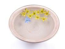 Drijvende de lentebloemen royalty-vrije stock foto