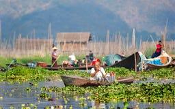 Drijvende tuinen op Inle-meer Myanmar Stock Foto