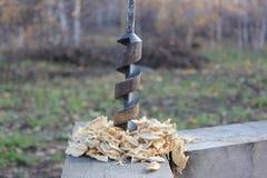 Drillborren i trädet klibbar ut royaltyfria foton
