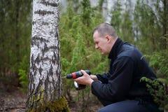 Drillborrhål i björkträd Royaltyfri Bild