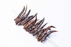 Drilled chilli Royalty Free Stock Images