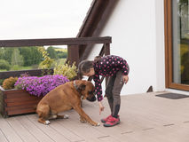 Drilling of dog Stock Photos