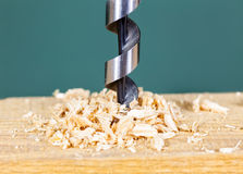 Drilling wood with auger bit. Wood drill bit with shavings Stock Image
