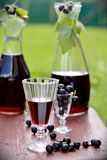 Drink of black currant stock photos