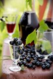 Drink of black currant royalty free stock photography