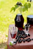 Drink of black currant Stock Photography