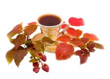 Drink with branches of raspberry. Tea of coffee drink brown on white background with branches of autumn raspberry Royalty Free Stock Image