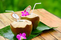 Drink Coconut Water, Milk. Diet. Nutrition, Hydration. Vitamins. Royalty Free Stock Photos