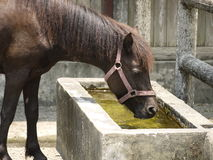 Drink horse Royalty Free Stock Photography