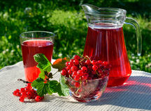 A drink red currant in the glass and carafe Stock Image