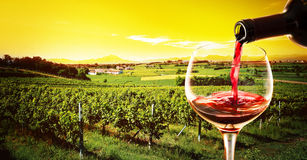 Drink in the vineyard at the sunset Royalty Free Stock Image