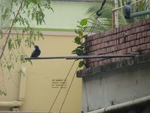 Drink water for wait brids. In the home dhaka bangladesh.wall,tree, and beauty Stock Photo