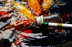 Drinken mjölkar fisken Royaltyfri Bild