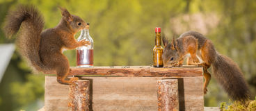 Drinking buddies Stock Images
