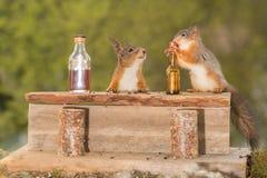 Drinking buddies Stock Image