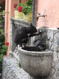 Drinking Cat. Cat drinking in a fountain - Riomaggiore, Cinque Terre, Italy royalty free stock images