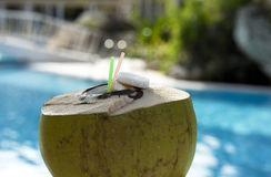 Drinking coconut with straws against swimpool Stock Images