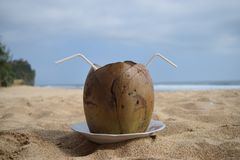 Delicious young coconut royalty free stock photo